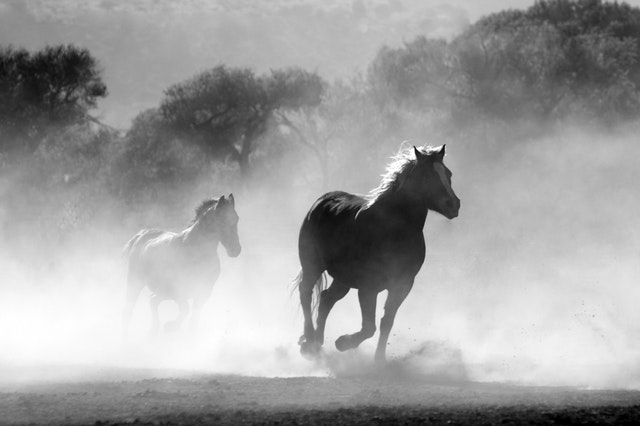 horse running though the fog